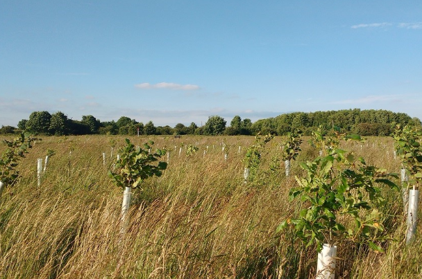 Kier Living pledges to plant 45,000 new trees to offset carbon usage